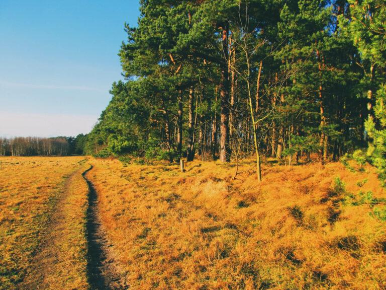 Saxtorpsskogen