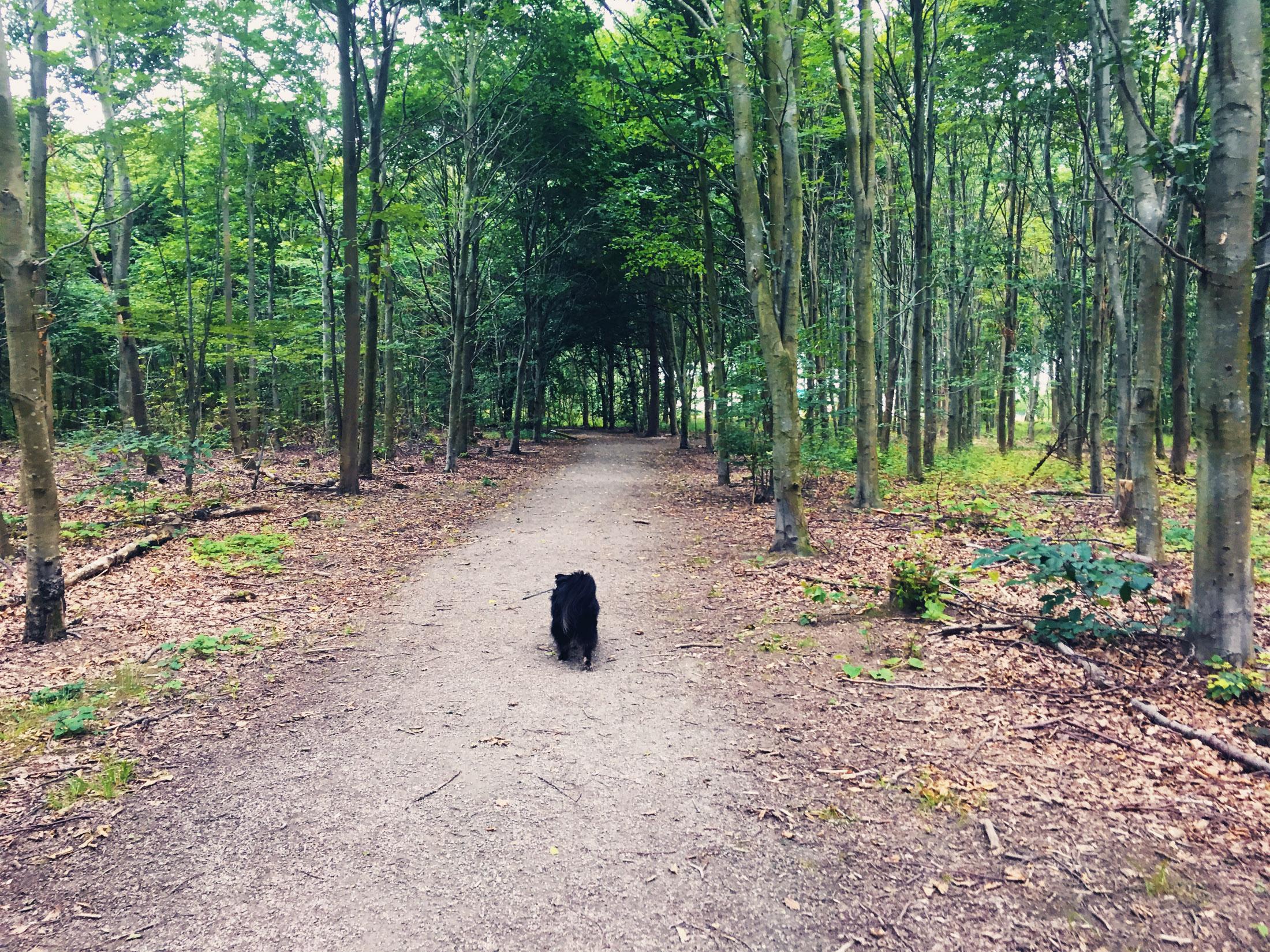 Bruces skog