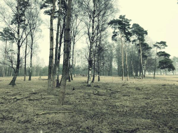 Hjorthägn Dösjebro