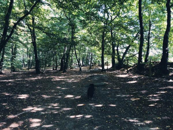 Knivsåsen naturreservat
