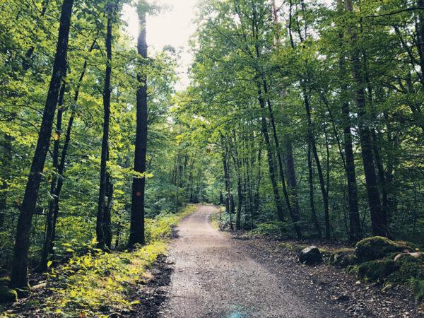 Danska Fall Naturreservat